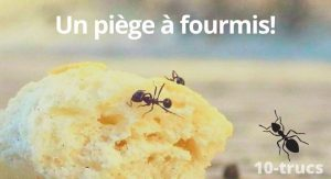 fabriquer un piège à fourmis maison