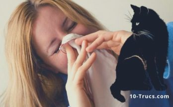 truc contre les allergies chat et chien
