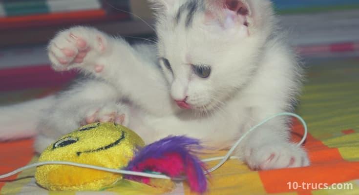 amuser un chat, jeux pour un chat,