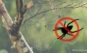 Répulsif anti araignée et piège à araignée