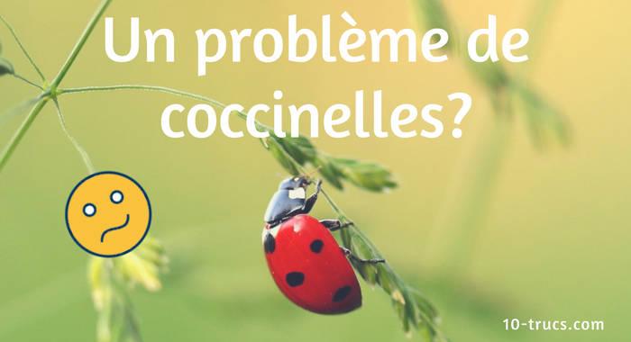 répulsif anti coccinelle et piège à coccinelle