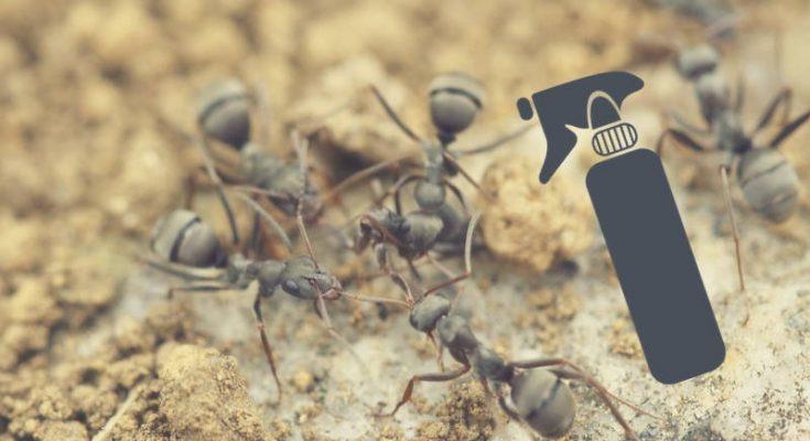tuer les fourmis naturellement dans la maison ventana blog. Black Bedroom Furniture Sets. Home Design Ideas
