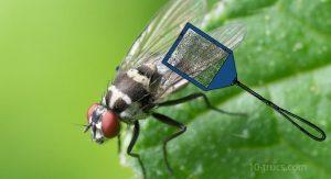 anti mouche naturel et répulsif contre les mouches