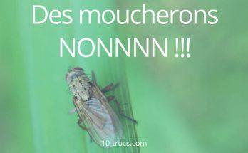 anti moucheron pour se débarrasser de ces insectes
