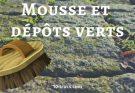 Anti mousse et anti dépôts verts