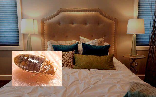 Anti punaise de lit, répulsif et piège