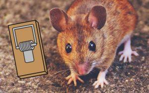 Répulsif anti souris pour faire fuir les souris