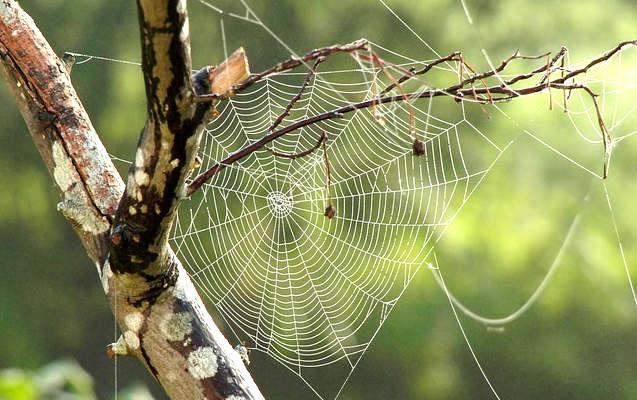 anti araignée pour éloigner les araignée