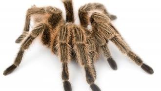 truc peur araignée, phobie des araignées,