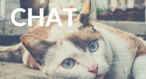 astuce pour chat et truc de chat
