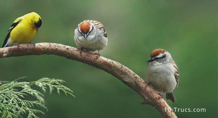 comment attirer les oiseaux dans son jardin et dans un nichoir