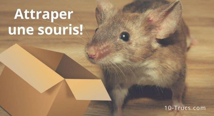 Comment attraper une souris?