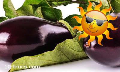 aubergine pour traiter un coup de soleil et brûlure