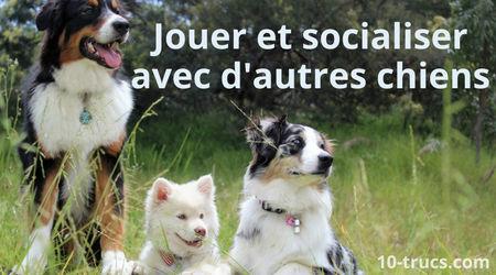Socialiser pour calmer son chien