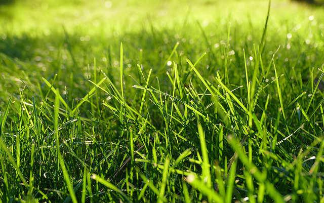 comment avoir une belle pelouse