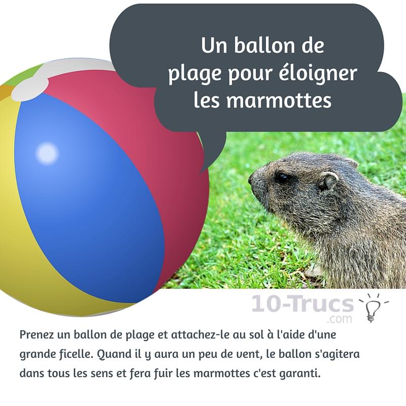 Un ballon de plage pour éloigner les marmottes