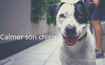 comment calmer un chien trop excité