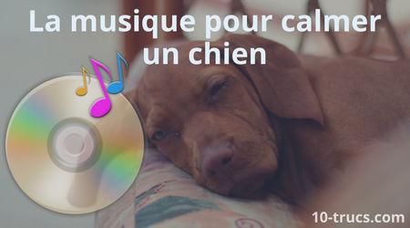 calmer un chien avec de la musique