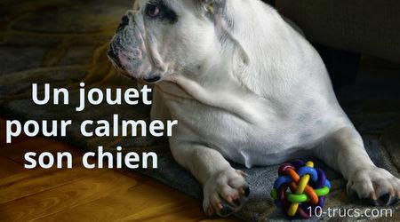 calmer un chien avec un jouet