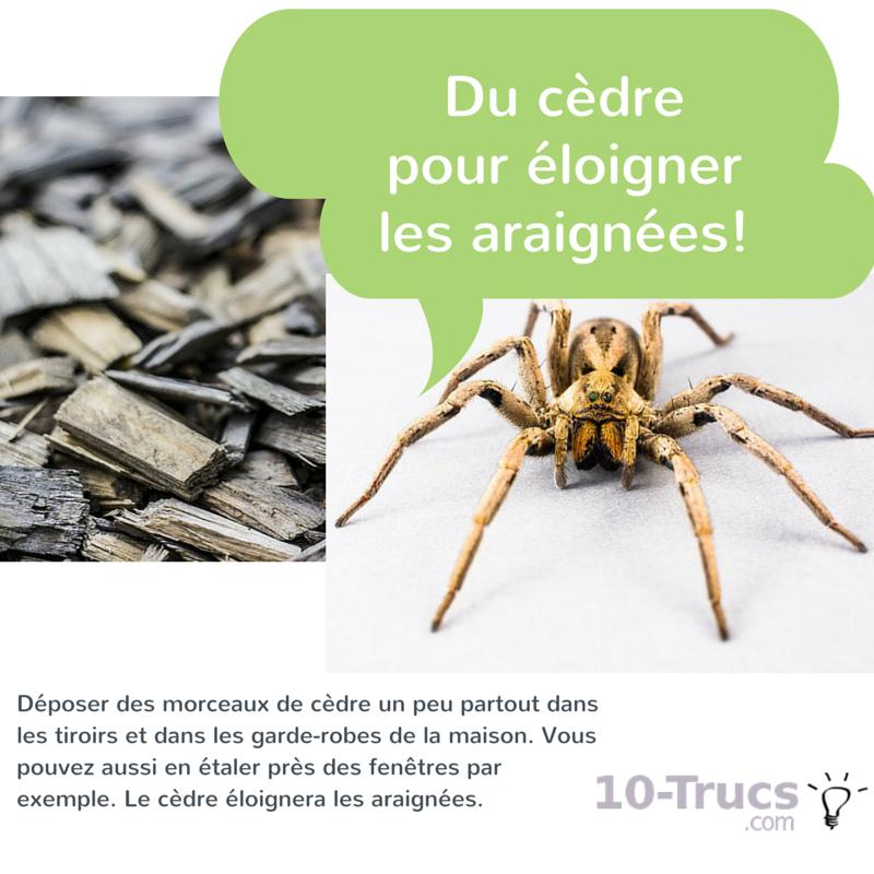 cèdre comme anti araignée pour vite éloigner les araignée