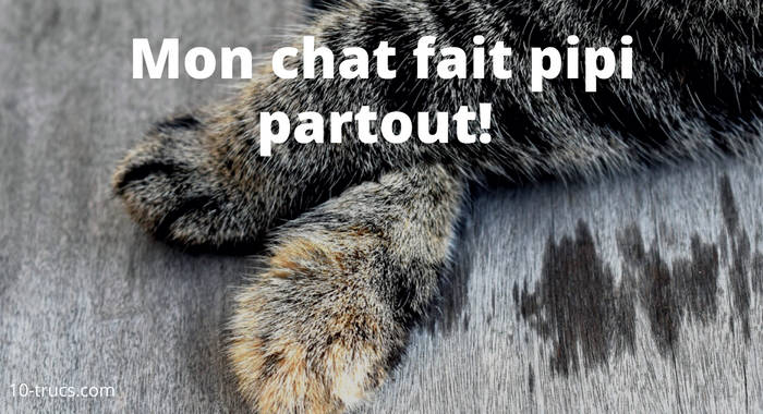 chat qui fait pipi partout, urine de chat,