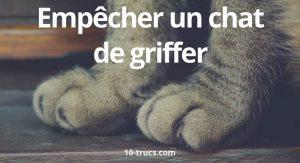 chat qui griffe, comment empêcher un chat de griffer