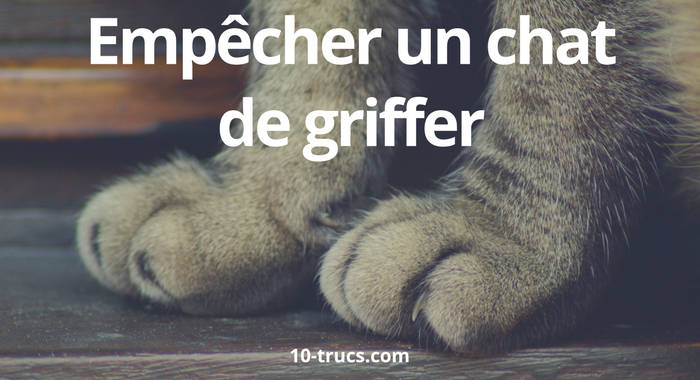 chat qui griffe, comment empêcher un chat de griffer