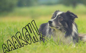 répulsif naturel pour chien