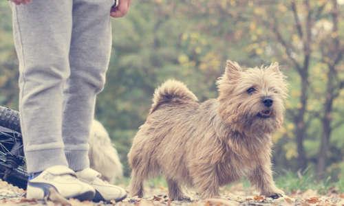 chien qui jappe sur les gens