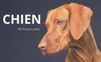 truc pour les chiens, tous les trucs et astuces sur les chiens
