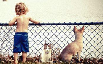 choisir un animal de compagnie, quel animal de compagnie choisir,