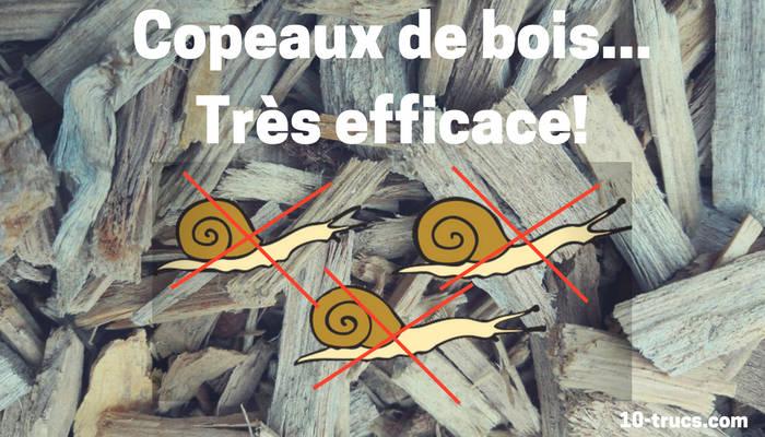 copeaux de bois comme anti limace naturel