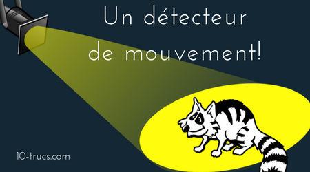 faire fuir les ratons laveurs avec des détecteurs de mouvement