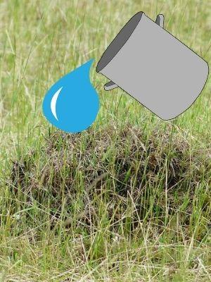 Comment détruire un nid de fourmis?
