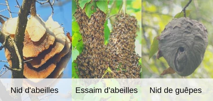 différence entre un nid d'abeille et un nid de guêpe