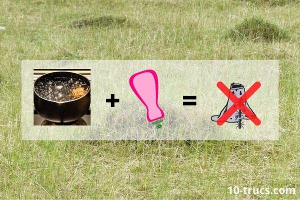 de l'eau bouillante pour détruire une fourmilière et ses fourmis
