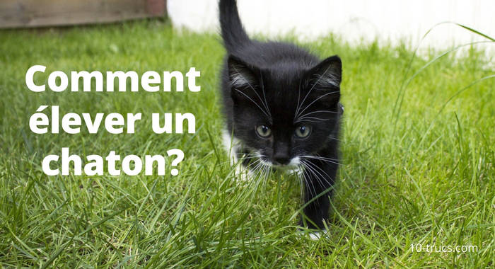 élever un chat, adopter un chat,
