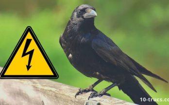 comment éloigner les corbeaux
