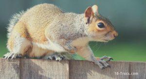 comment éloigner les écureuils