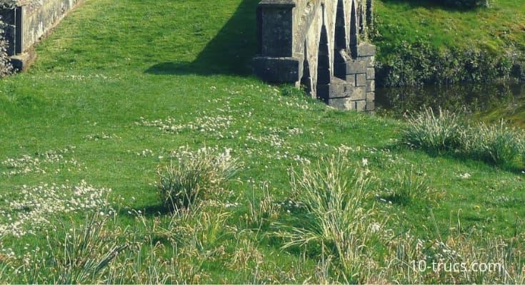enlever et arracher les mauvaises herbes sur le gazon et le gravier