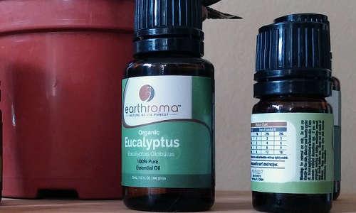 Huile essentielle d'eucalyptus comme anti souris