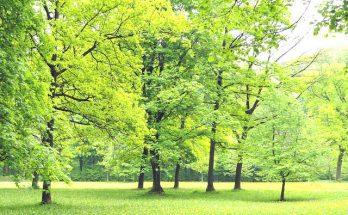 faire pousser un arbre