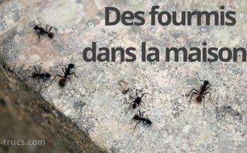Des fourmis dans la maison, piège anti fourmis