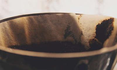 marc de café contre les fourmis
