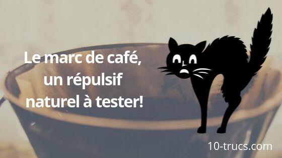 Le marc de café comme répulsif anti chat