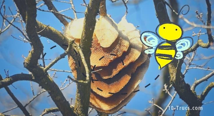 enlever et détruire un nid d'abeille
