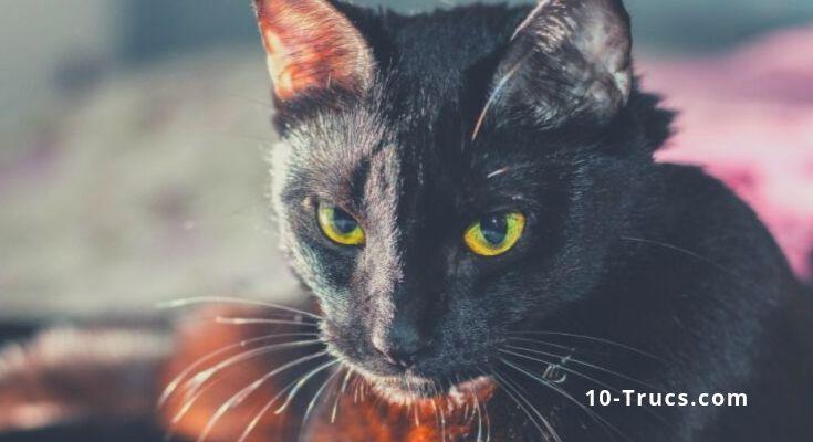 peur des chats