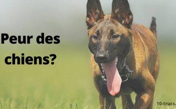 peur des chiens et phobie