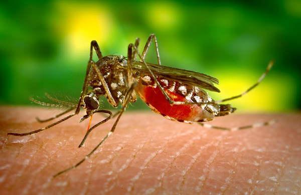 soulager une piqûre de moustique, piqûres de moustiques,