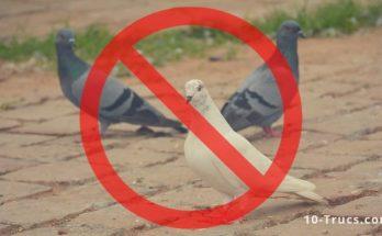 Répulsif anti pigeon pour faire fuir les pigeons